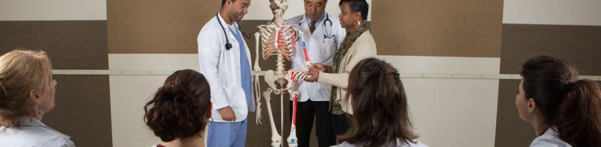 Licenciatura En Ciencias En Ciencias De La Salud (pre Med)