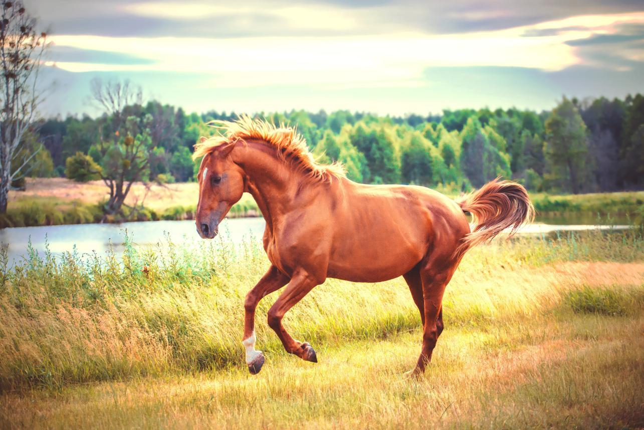 Estudios equinos
